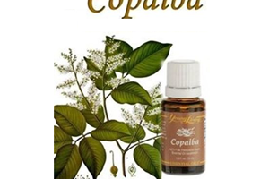 Health Benefits of Copaiba Essential oil