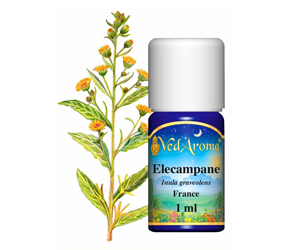 Health Benefits of Elecampane Essential Oil