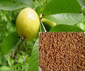 Health Benefits Of Guava Seeds