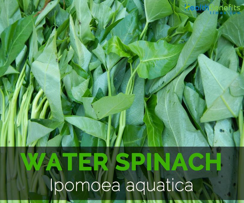 Swamp-cabbage---Ipomoea-aquatica