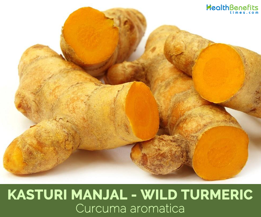 Kasturi Manjal wild turmeric Curcuma aromatica