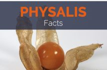 Physalis Facts