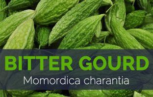Bitter-gourd---Momordica-charantia