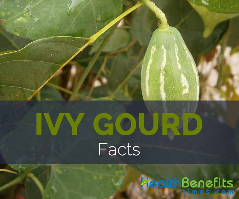 Ivy Gourd FActs