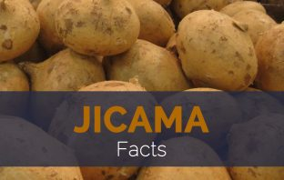 Jicama Facts