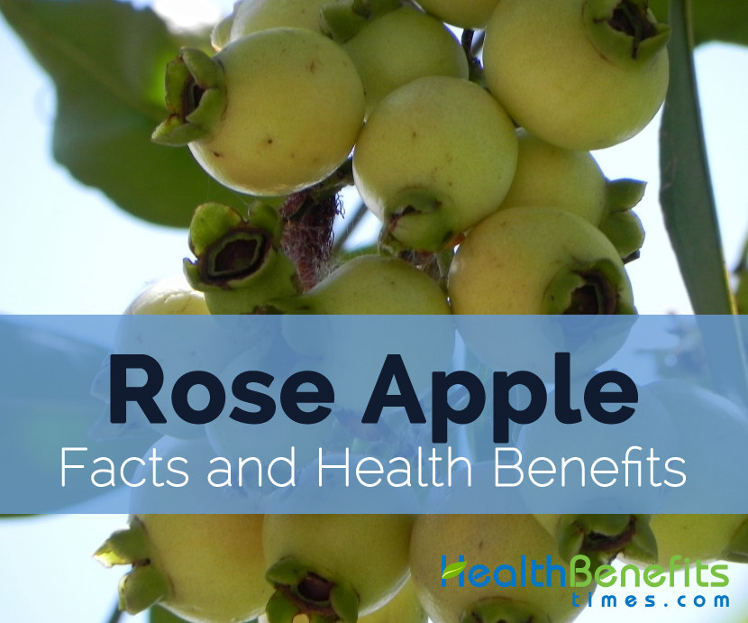 Rose-apple-facts-and-health-benefits