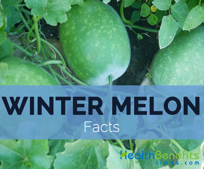 winter-melon-facts