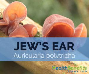 Jew's-ear---Auricularia-polytricha
