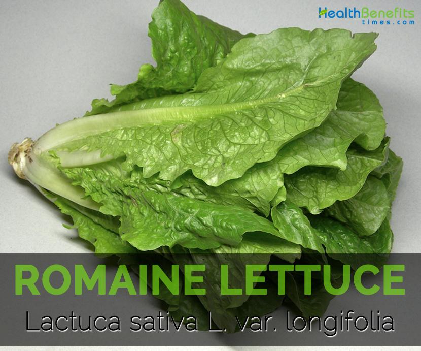 Romaine-lettuce---Lactuca-sativa-L.-var.-longifolia