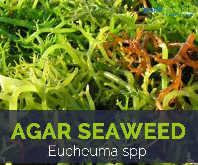 Agar seaweed facts