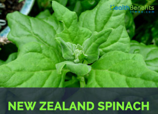 New Zealand spinach - Tetragonia tetragonioides