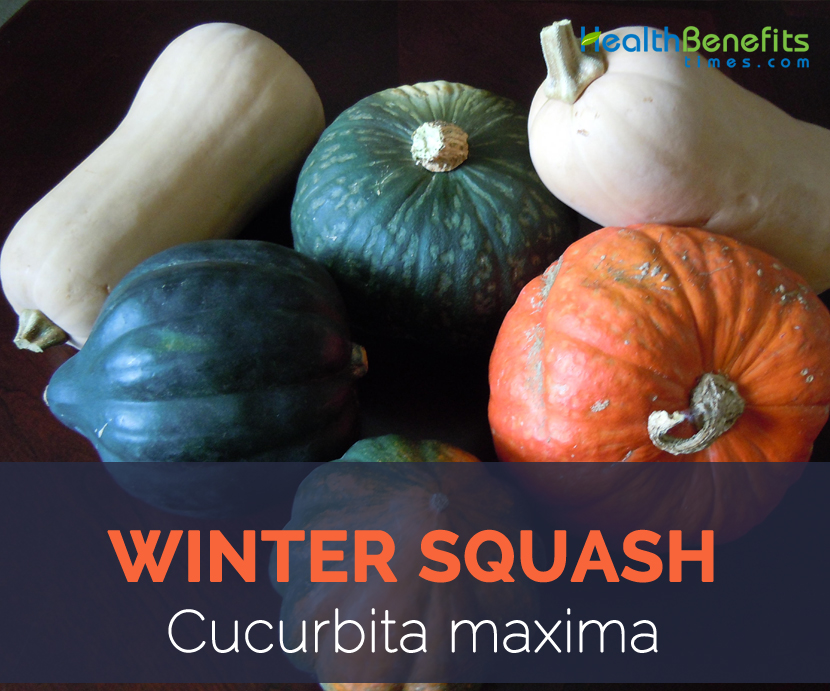 Winter Squash facts and health benefits