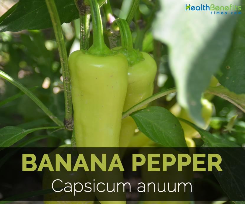 Banana-pepper-Capsicum-anuum