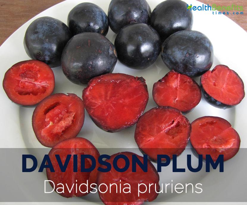 Davidson-plum---Davidsonia-pruriens