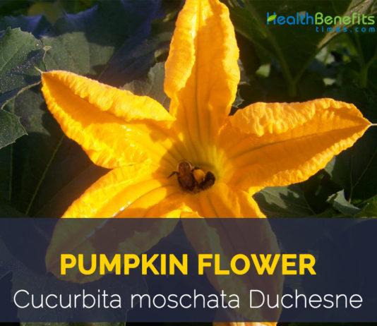 Health benefits of Pumpkin flowers
