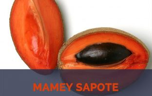 Mamey Sapote facts and health benefits