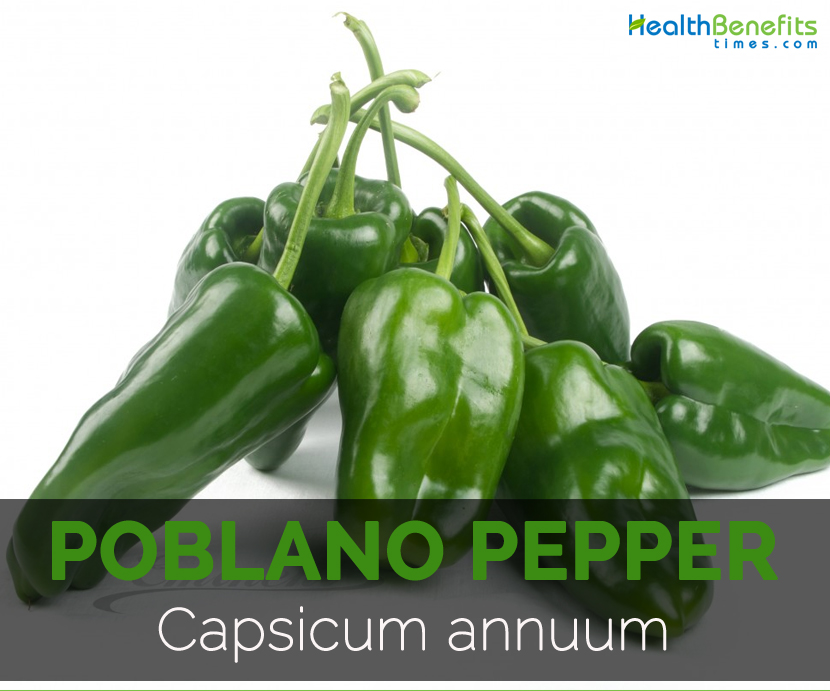 poblano pepper facts health benefits and nutritional value. Black Bedroom Furniture Sets. Home Design Ideas