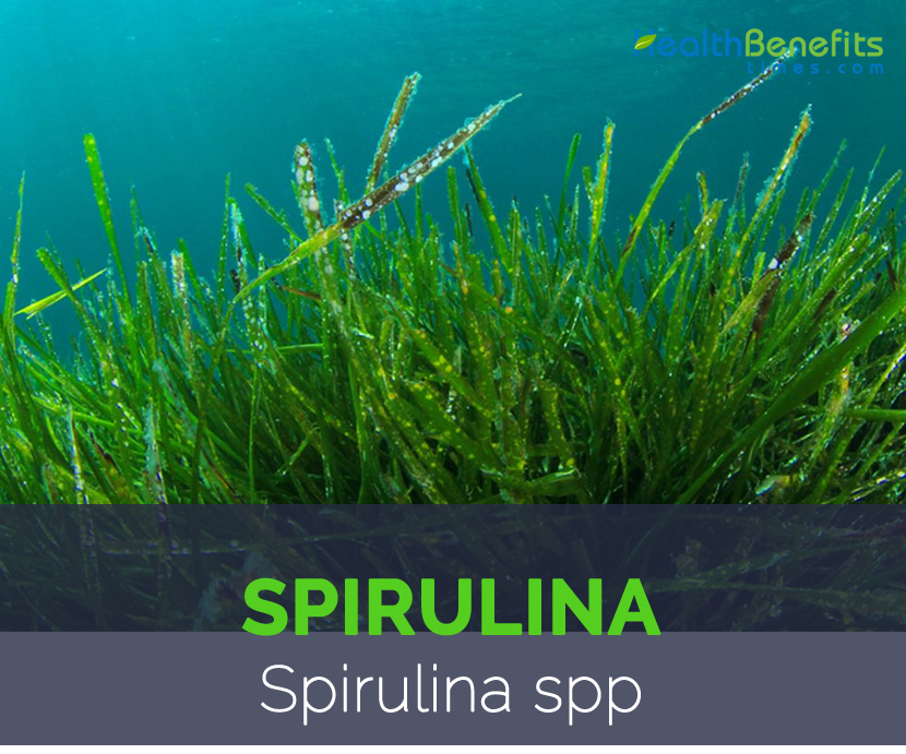 Spirulina on Green Spiral Shape