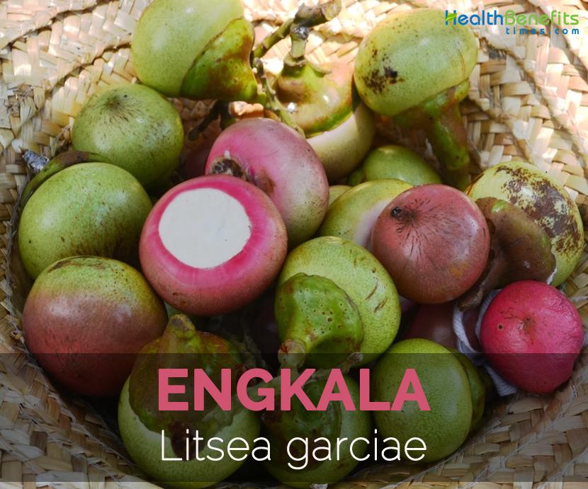 engkala-litsea-garciae