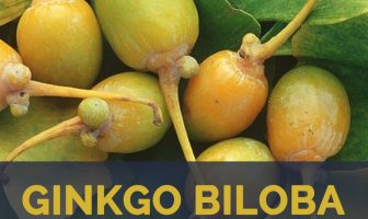 Ginkgo biloba facts and health benefits