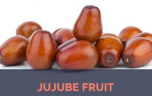 Jujube fruit facts and health benefits