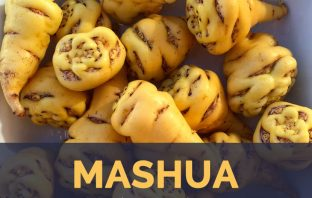 Mashua facts and health benefits