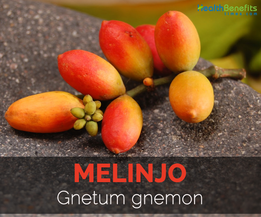 Melinjo Facts Health Benefits And Nutritional Value