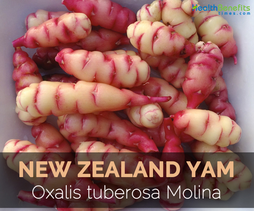 New Zealand Yam Facts Health Benefits Amp Nutritional Value