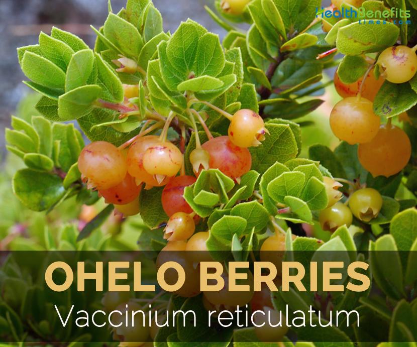 ohelo-berries-vaccinium-reticulatum