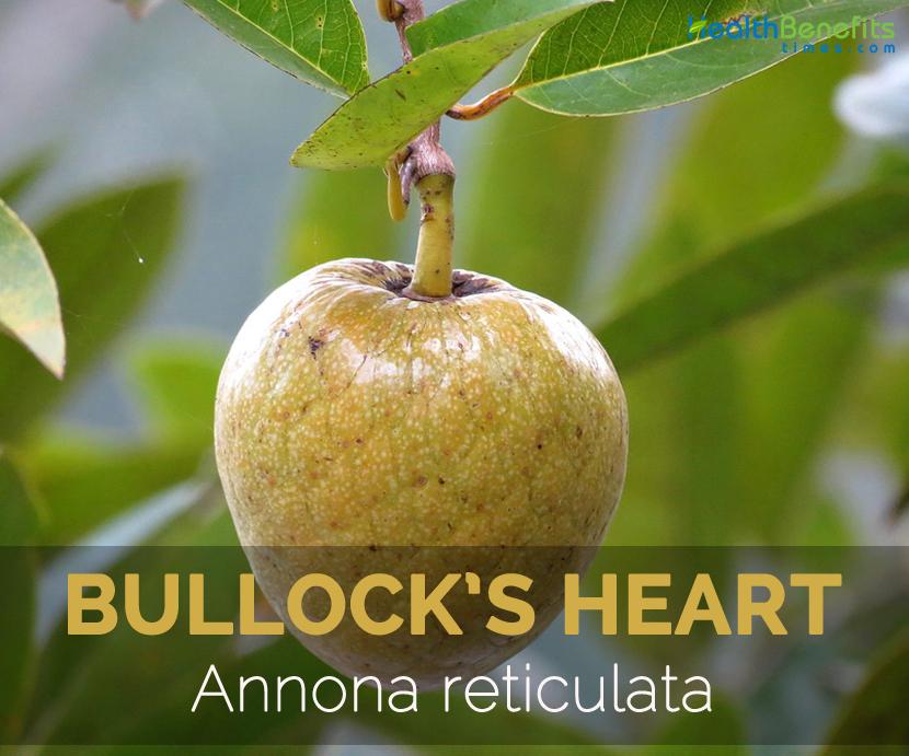 bullockheart-annona-reticulata