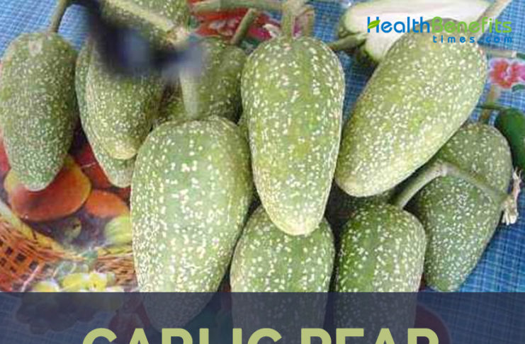 Garlic Pear facts and health benefits
