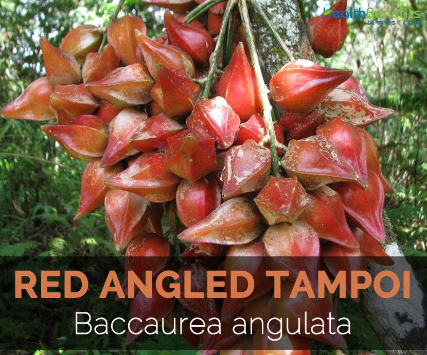 red-angled-tampoi-baccaurea-angulata