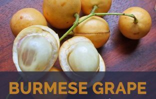 Burmese Grape facts and health benefits