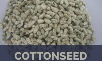 Cottonseed facts and health benefits