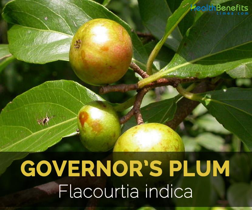 governors-plum-flacourtia-indica