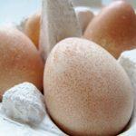 Guinea Fowl Egg