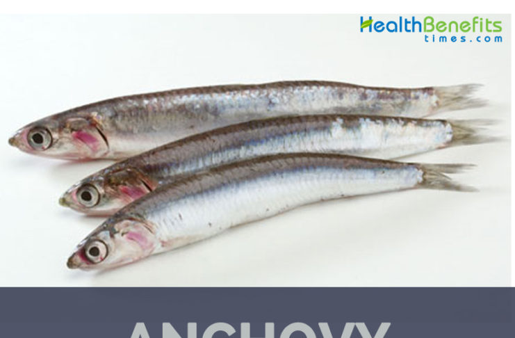 Anchovies facts and health benefits
