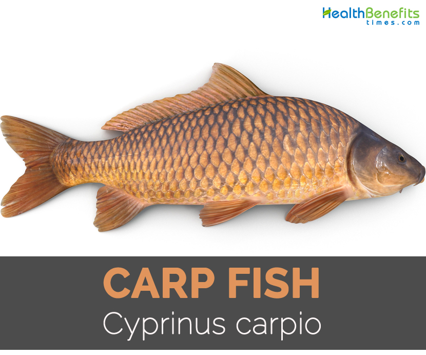 Carp fish Facts, Health Benefits and Nutritional Value
