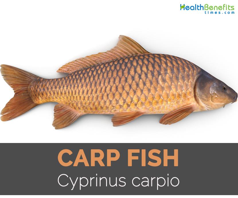 Carp fish - photo#7