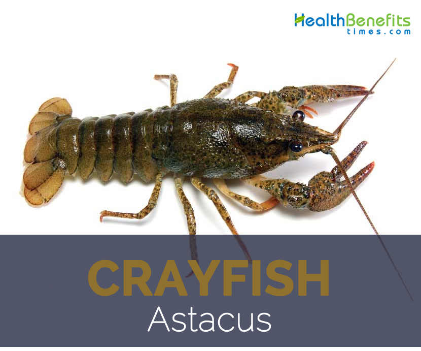 Crayfish facts and health benefits