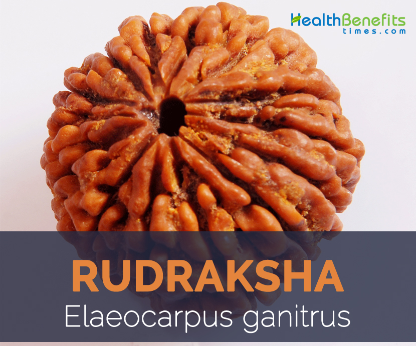 Rudraksha facts and health benefits