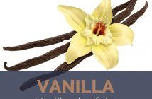 Vanilla facts and benefits