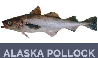 Alaska pollock facts and health benefits