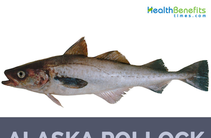 Alaska pollock facts and health benefits