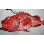 Blackgill Rockfish