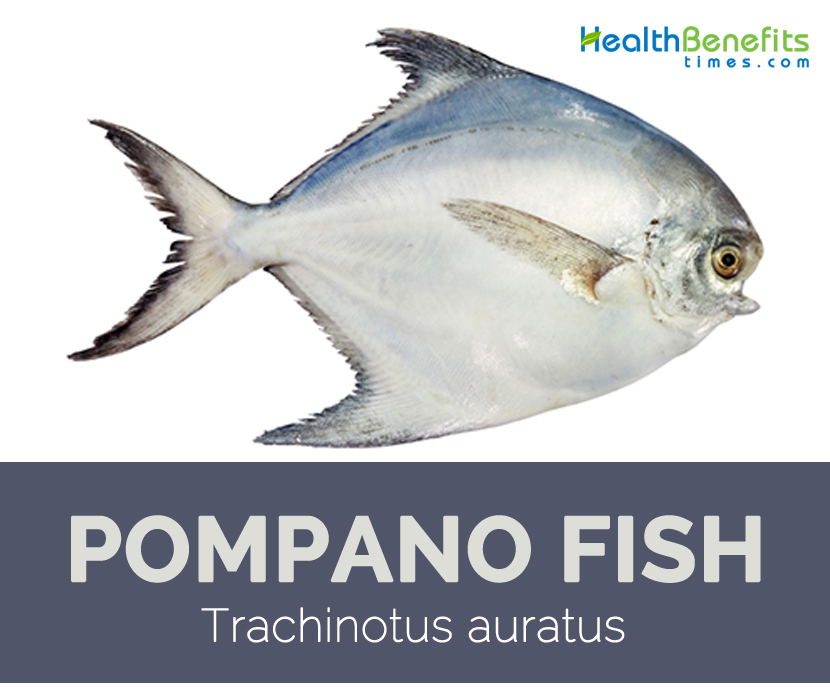 Pompano fish facts and health benefits for Pompano fish recipe