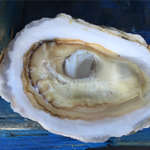 Quonset Point Oysters