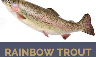 Rainbow trout facts and health benefits