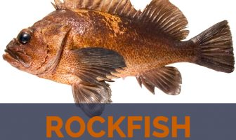 Rockfish facts and nutritional value