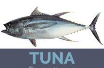 Tuna facts and health benefits